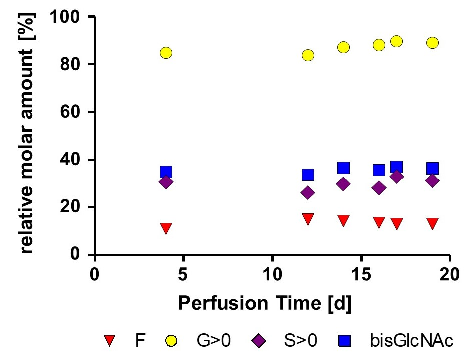 Graphic Glycan profil stability of low fucosylated mAb produced in perfusion process