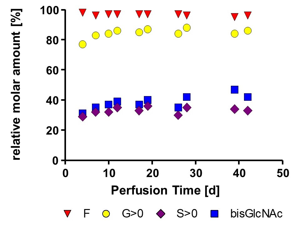 Graphic Glycan profil stability of non-optimized mAb produced in perfusion process